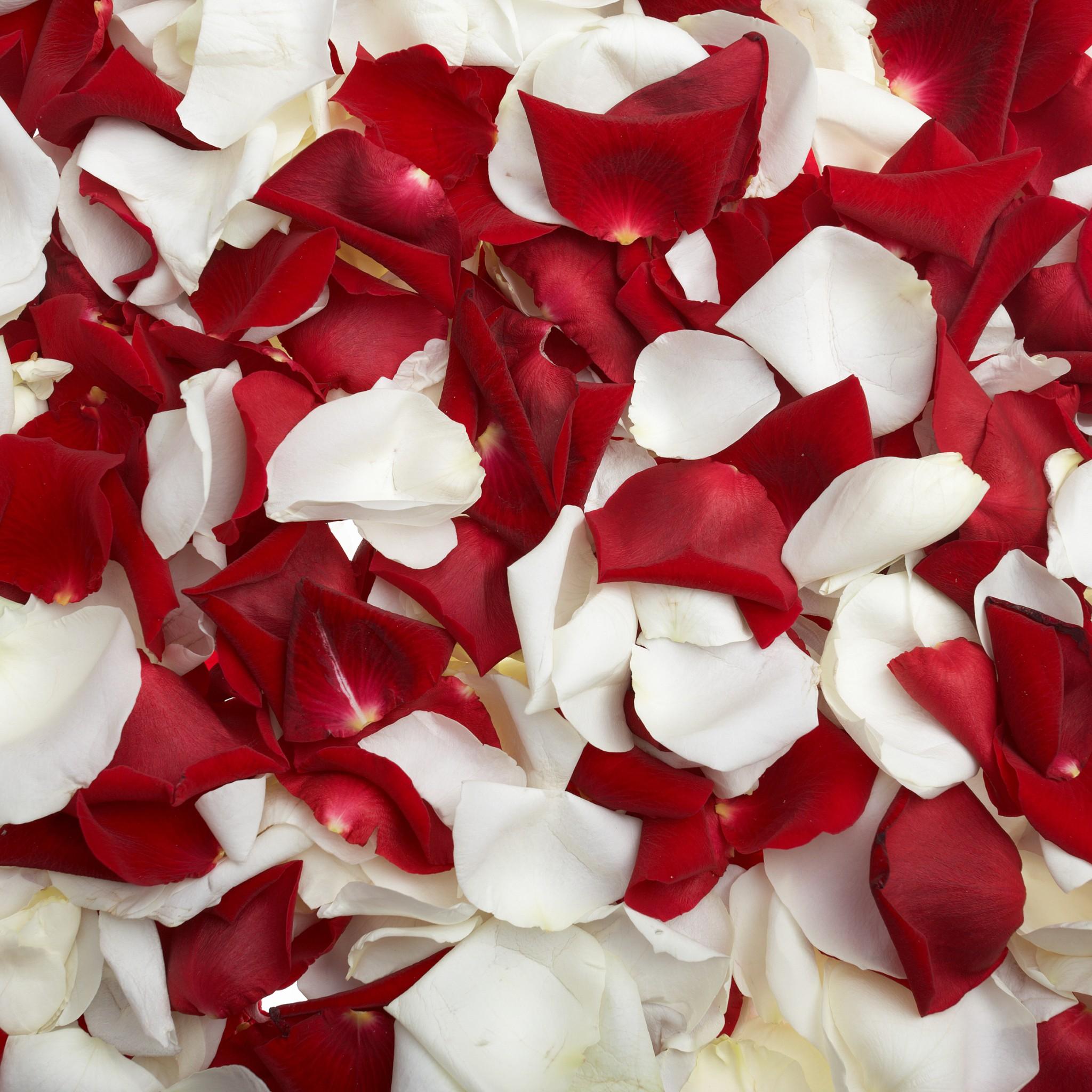30 wallpaper uri retina pentru iphone ipod touch ipad si - Red rose petals wallpaper ...