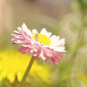 Beautiful-Flower-Under-Sunlight-ipad-air-wallpaper-ilikewallpaper_com