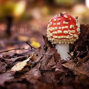 Forest-Wither-Mushroom-ipad-air-wallpaper-ilikewallpaper_com