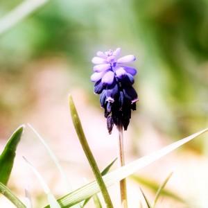 Iris-flowers-ipad-air-wallpaper-ilikewallpaper_com