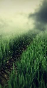 grass-lines