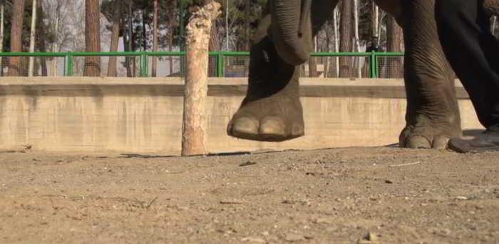 HTC Desire EYE calcat de elefant