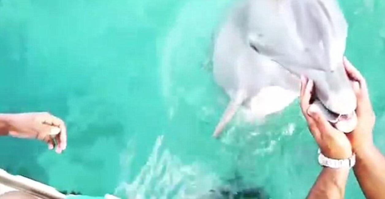 delfin iPhone majoreta