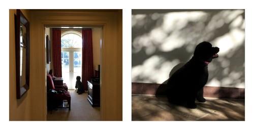 iPhone fotograf oficial casa alba 2