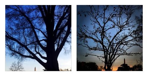 iPhone fotograf oficial casa alba 8