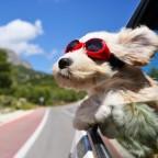 dog_face_wind_glasses_96452_2048x2048
