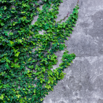 wallpaper Home iOS 10 1