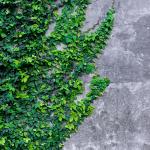 wallpaper Home iOS 10