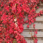wallpaper Home iOS 10 6