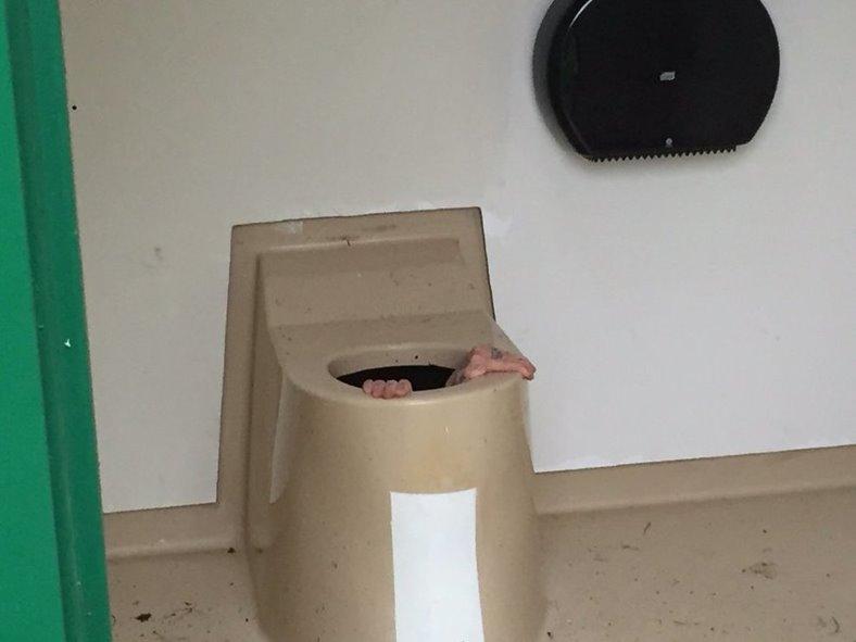 norvegian cazut wc public