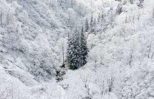 wallpaper-iarna