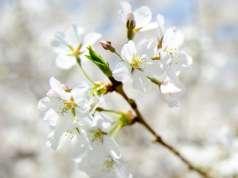 wallpaper-floare