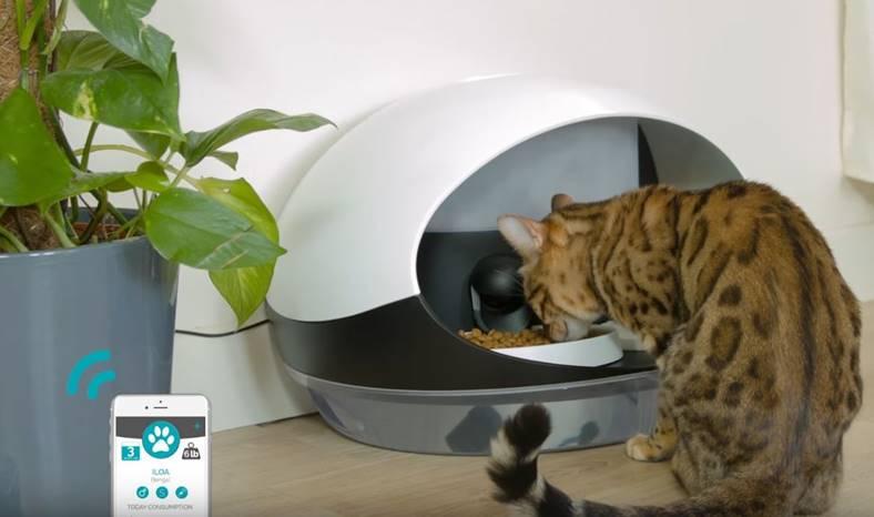 ces-2017-catspad-mancare-pisici