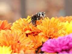 wallpape-floare-albina-iphone