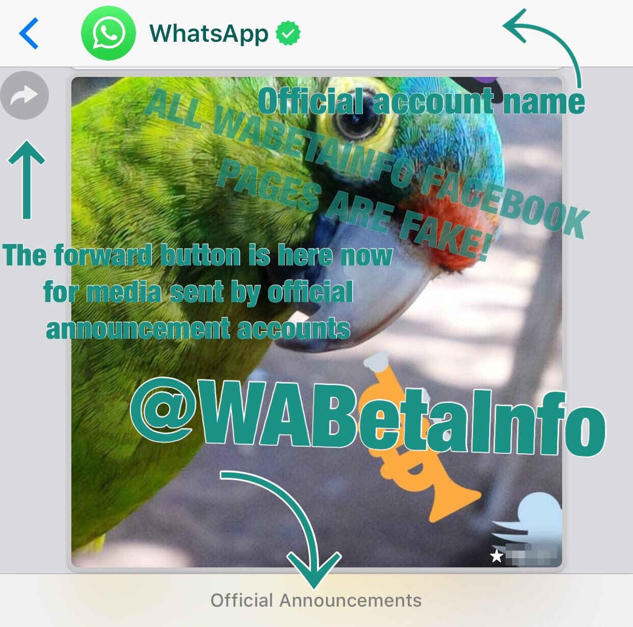 whatsapp noua aplicatie detaliile android