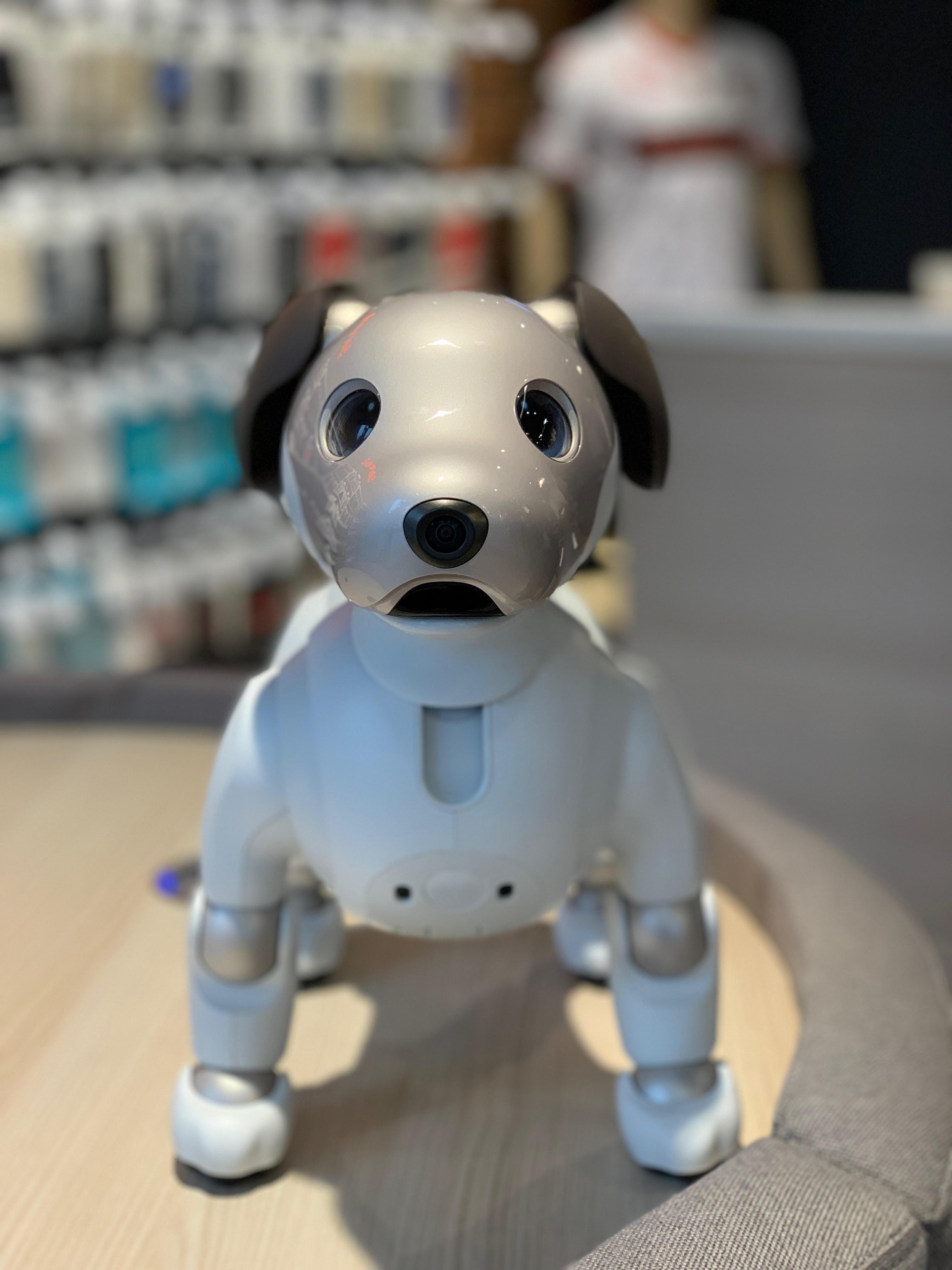Intelligent puppy Sony Aibo