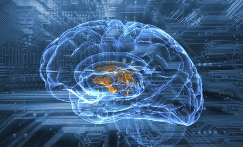 Creierul Uman limba