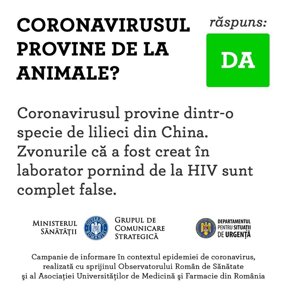 Coronavirus Romania origine animala lilieci