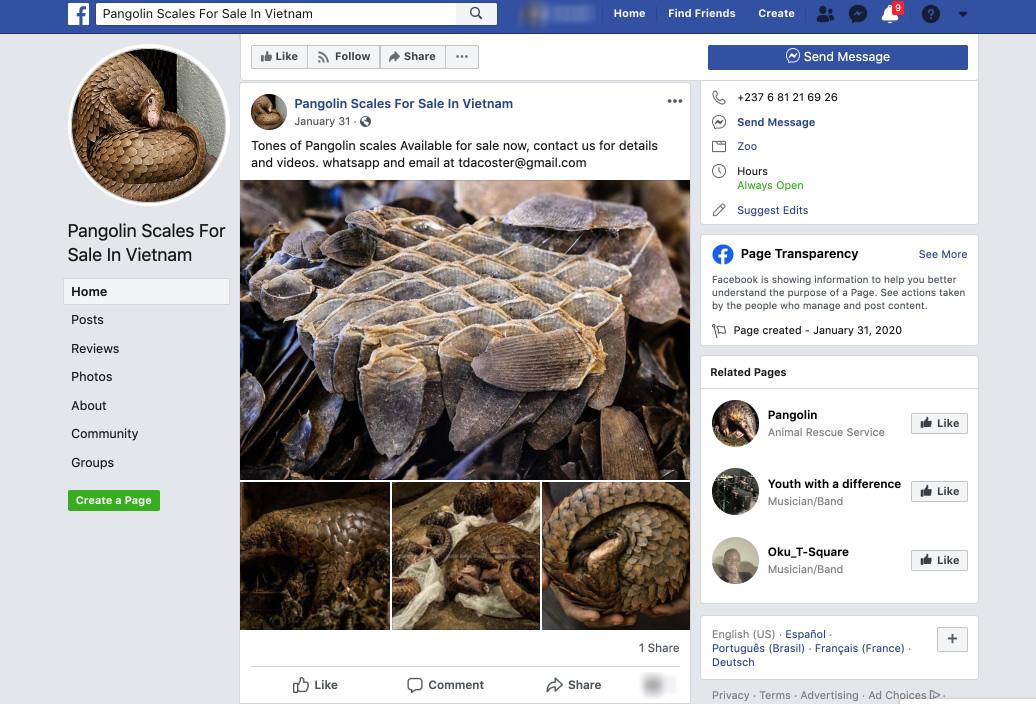 Facebook pangolin vanzare